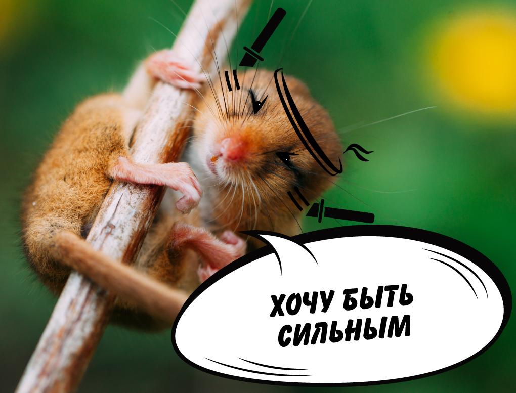Предпродажа 1 год Утро Камышовая